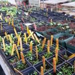 greenhouse plants 04 03 15 2
