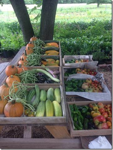 harvest july 1 veggies 1
