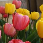 Spring Has Sprung 102